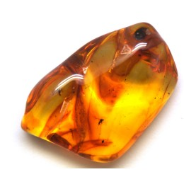Baltic amber stone with insects