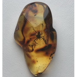 Amber stone with insect
