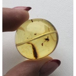 Drilled amber bead with insect