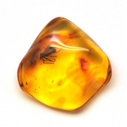Baltic amber stone with insect