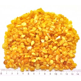 Drilled Baltic amber beans shape peaces 100 g.