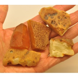 Lot of 5 raw Baltic amber stones